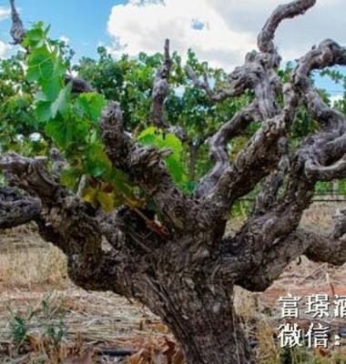 澳洲黄尾袋鼠梅洛、西拉干红葡萄酒图片/澳洲黄尾袋鼠梅洛、西拉干红葡萄酒样板图 (4)