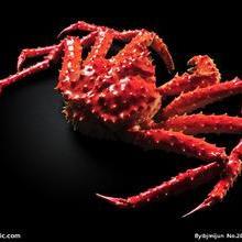 供应青岛冻海产品螃蟹进口专业全套代