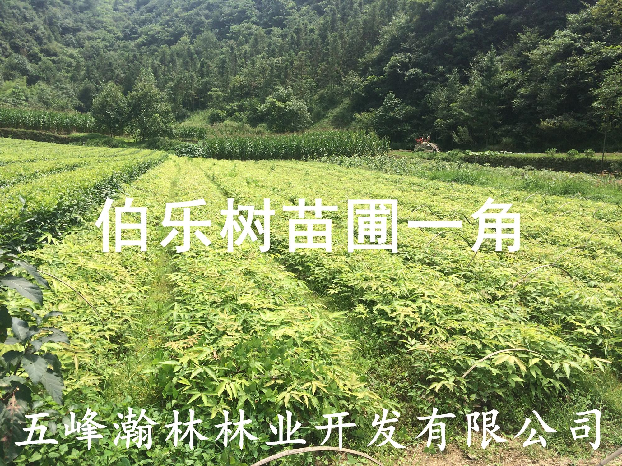 壁纸 成片种植 风景 植物 种植基地 桌面 2000_1500