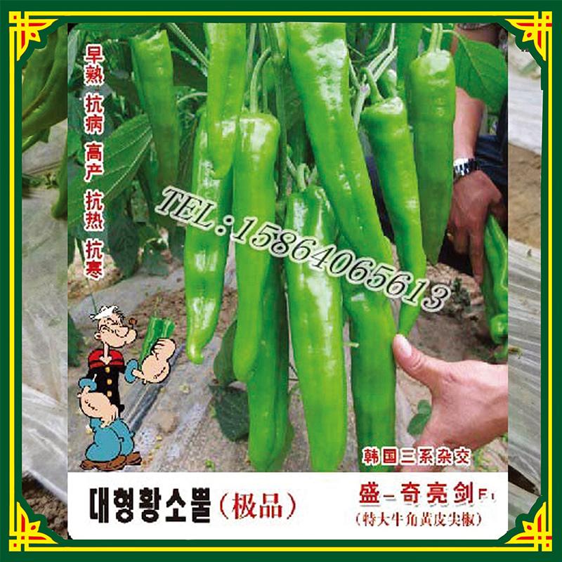 供应亮剑  奇山种业厂家供应 辣椒种子批发 尖椒种苗价格