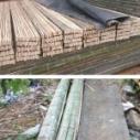 内蒙古竹架板价格图片
