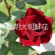 鲜花批发 婚庆用花 玫瑰图片