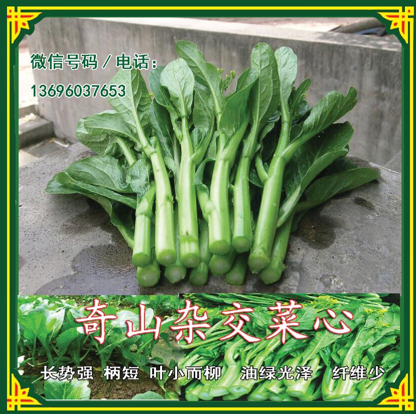 菜心种子||油菜心种子厂家直销|油菜心种子优质品种|油菜种子价格