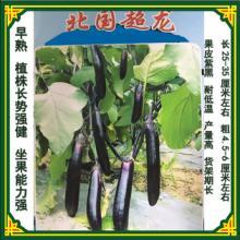 北国超龙茄子果皮紫黑,光泽度好,果肉细腻紧致