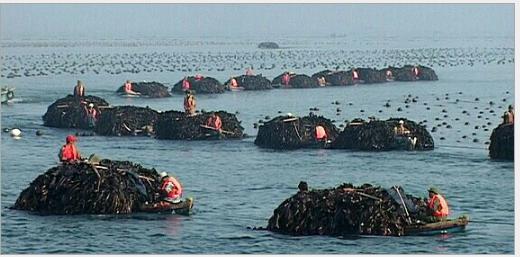 长岛县大钦岛鲜活石斑鱼鲜活石斑鱼批发价鲜活石斑鱼