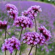 花卉批发图片