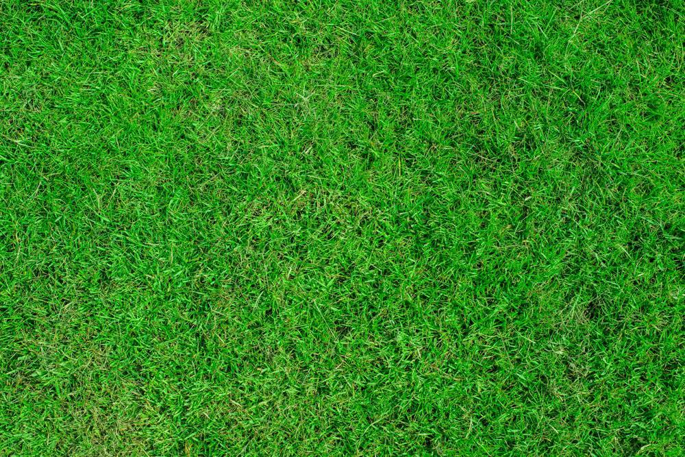 绿化俯视图贴图素材