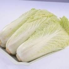 白菜批发 白菜价格 白菜厂家 白菜供应 山东白菜 白菜基地代办 白菜哪家好 聊城白菜批发