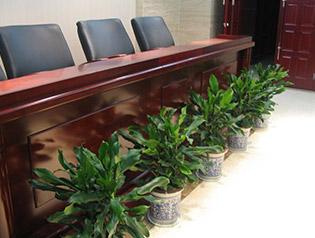 北京绿植租摆绿植养护园林景观设计摆放办公室装修布置改造