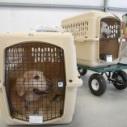专业办理宠物出国 宠物入境许可证申请 宠物出国哪家公司好