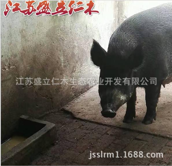 原生态野猪肉 特种野猪肉 野猪肉 新鲜猪肉批发 量大优惠