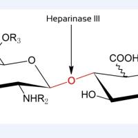 供应肝素酶III(heparinase III)