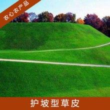 抗旱耐践踏护坡型草皮人工培育绿植高羊茅草地草坪/早熟禾草皮