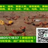 南京淮南王土鸡批发,淮南王土鸡管理