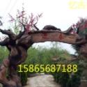 假树大门承包图片