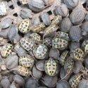 花龟种苗养殖场图片