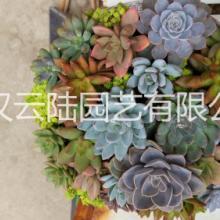 武汉高端花卉绿植水培花烛,红掌绿植盆栽送货上门,花姿奇特美妍 武汉吸甲醛的植物批发
