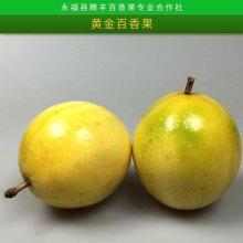 广西黄金百香果批发新鲜水果口感香甜金色百香果西番莲基地直销批发
