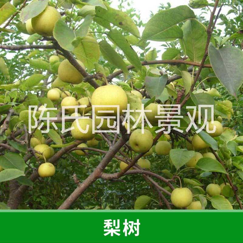 壁纸 果树 矢量 树 水果 小果 植物 800_800