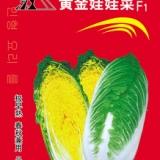 奇山黄金娃娃菜种子 娃娃菜种子批发 黄心娃娃菜种子 盛琪蔬菜种子公司销售