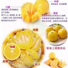 冰糖橙子厂家直销 冰糖橙树苗 永兴冰糖橙图片