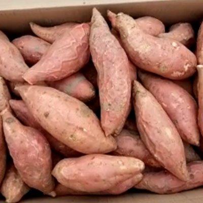 日本  韩国、台湾、马来西亚、印度、印尼、东南亚 出口烟薯25  烤薯生地瓜