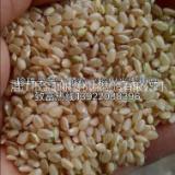 大米加工成套設備-廠家批發報價價格