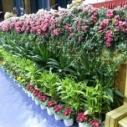 佳木斯绿植花卉租赁租摆图片