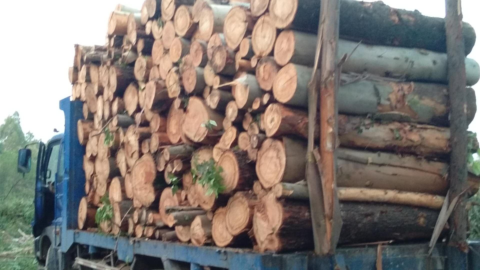 承接园林街道树木修枝 小区危树砍伐处理 广州公路绿化修枝砍伐