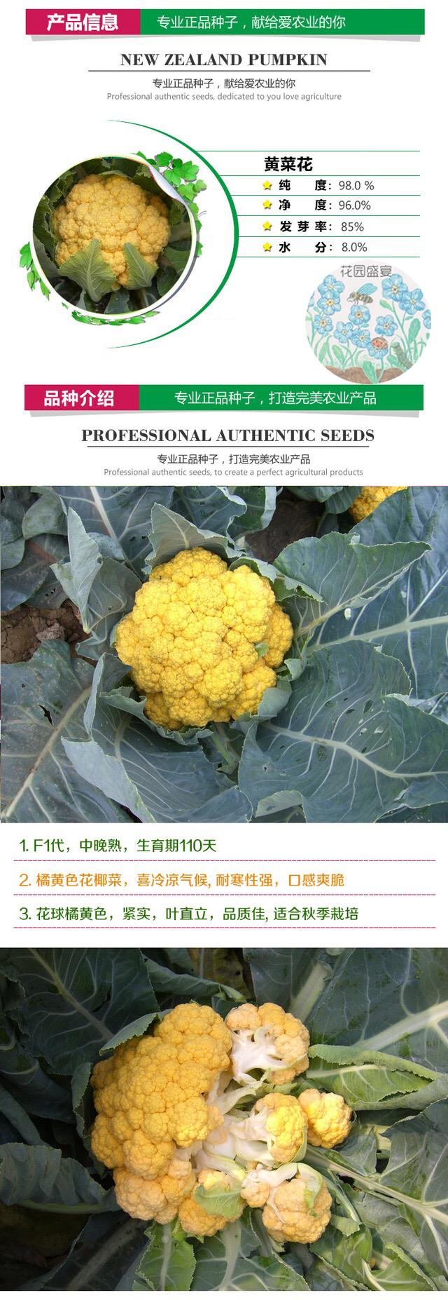 日落黄色花椰菜种子保健蔬菜种子高档蔬菜种子特色蔬菜种子进口种子价格进口种子公司