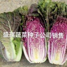 特色蔬菜紫色大白菜种子高产紫白菜白菜基地种植价格高产紫白菜种子白菜基地种植品种