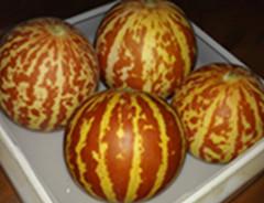 基地直供奇香水果香水瓜种子低价批发