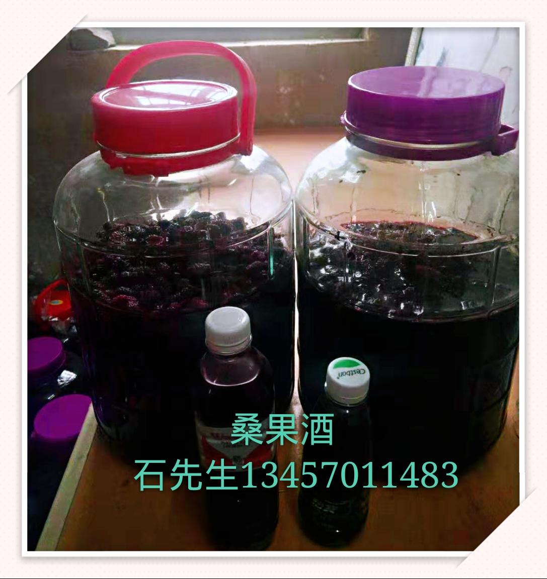 桑果酒生产厂家