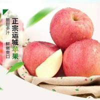 运城红富士苹果批发商,运城红富士苹果供应,运城红富士苹果价格