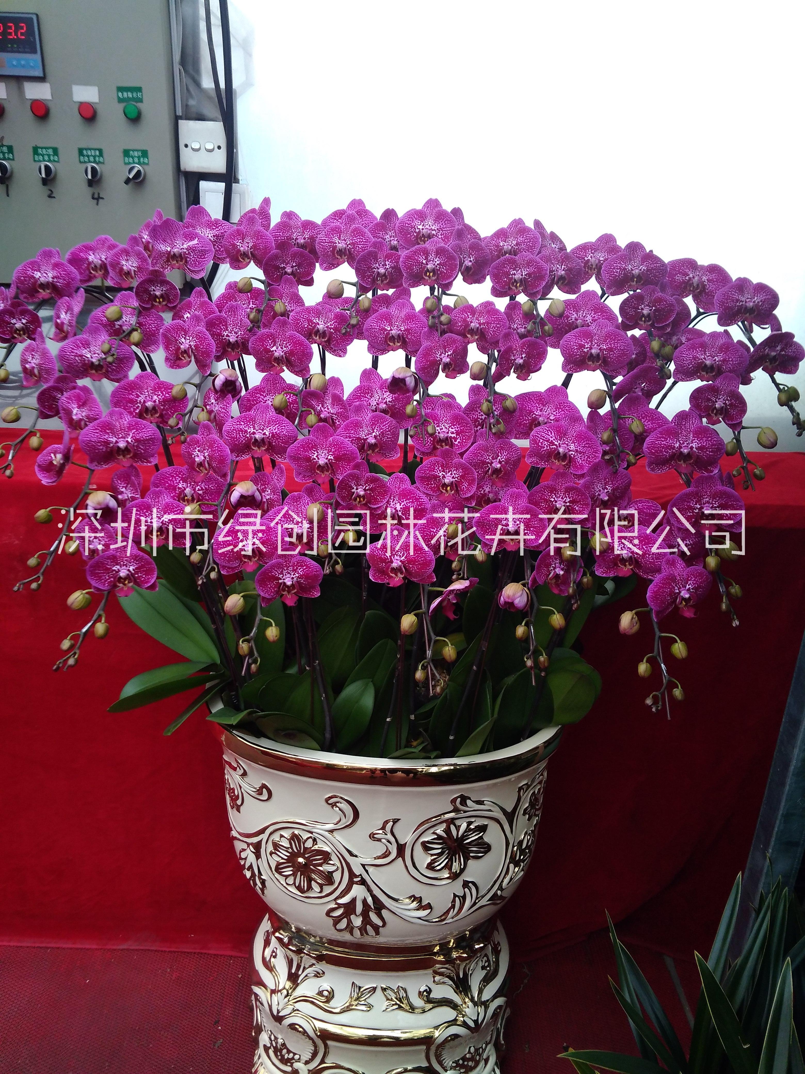 鲜花、厂家种植、定制、批发价格【深圳市绿创园林花卉有限公司】