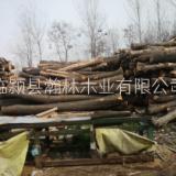 苦楝木家具板材 厂家生产实木家具 蒸汽烘干苦楝木 板材定制实木家具配件 苦楝木价格 苦楝木是什么木