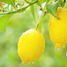 空气清新剂香精 柠檬香精 水果香精图片