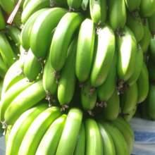 【云南威尼斯香蕉】新鲜水果现摘非红美人红皮香蕉天宝香蕉苹果蕉批发
